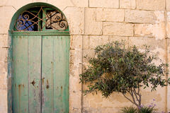 Old Door And Tree. An old door with a small tree royalty free stock photo