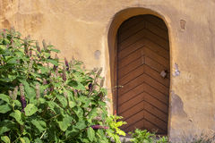 Old door. Wall and plants Royalty Free Stock Photos