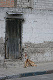 Old Door in a Wall with a Stray Dog Royalty Free Stock Photo