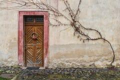 Old door. Wooden door overgrown with ivy Royalty Free Stock Photo