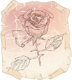 Old drawing roses on paper erased Royalty Free Stock Images