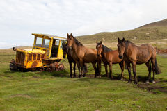 Old dredger and horses Royalty Free Stock Photo