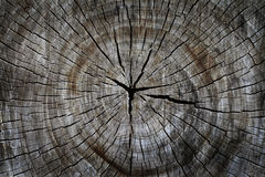 Old dried tree cut Stock Photos