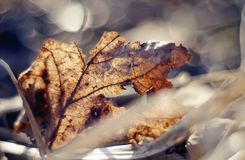 Old dried-up fragmentary leaf close up. Royalty Free Stock Photo