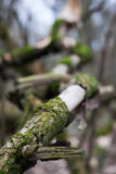 Old driftwood covered with moss Royalty Free Stock Images