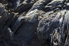Old Driftwood Grunge Texture Royalty Free Stock Image