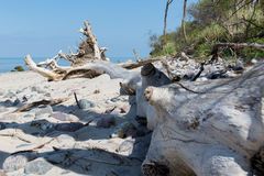 Old driftwood tree trunk on the beach of the Baltic Sea against Stock Photos