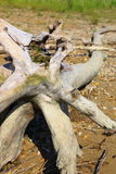 Old driftwood Royalty Free Stock Photos