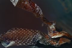 Old dropped snake skin Stock Images