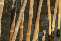 Old dry bamboo Stock Photo
