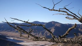 An old dry big tree on top of a mountain in the background of a beautiful landscape. slow motion, 1920x1080, full hd. An old dry big tree on top of a mountain in stock video footage