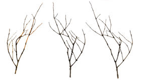 Old dry branches blackberry, Sicks and twigs, wood bundle isolat. Ed on white background Stock Photography