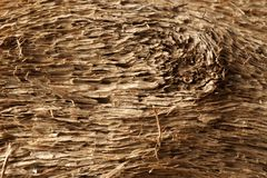 Old dry drift wood weathered and grunge. Old rough and weathered wooden surface close up, dirty, textured and detailed stock photos