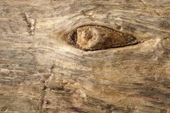 Old dry drift wood weathered and grunge. Old rough and weathered wooden surface close up, textured and detailed Stock Photo