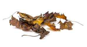 Old dry fallen autumn leaves Royalty Free Stock Photo