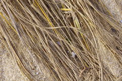 Old dry grass on beach Royalty Free Stock Photo
