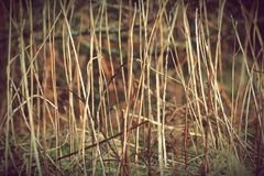 Old dry grass plants texture background. Retro Vintage photo with use of colour filters Stock Images