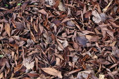 Old and dry leafs on the ground Royalty Free Stock Photo