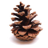 Old Dry Pinecone isolated Stock Image