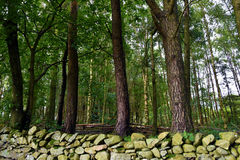 Old dry stone wall and trees. Dry stone wall and deciduous  trees in cumbria, lake district  england Stock Photo