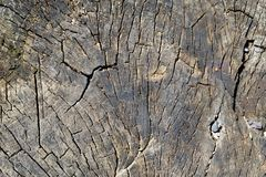 Old dry stump with growth rings closeup background Stock Images