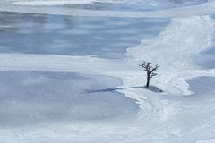 Old dry tree in afrozen world stock photo