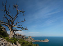 Old dry tree growing on a mountain slope stock photos