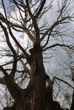 Old dry tree Stock Photo