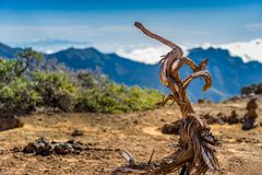 Old dry tree on volcanic mountains landscape Royalty Free Stock Photo