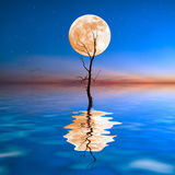 Old dry tree in water Royalty Free Stock Photo