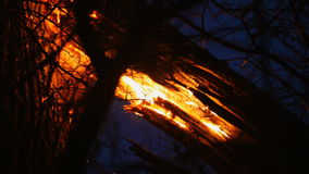 Old dry trees are burning in the forest at night.  stock video footage