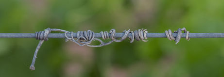 Old Dry Vine Tendrils on Wire. Royalty Free Stock Images