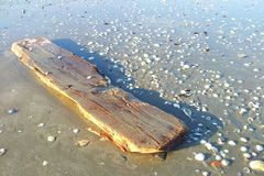 Old dry wood on beach Royalty Free Stock Photo