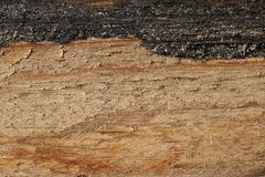 Old dry wood weathered and grunge. Old rough and weathered wooden surface close up, dirty, textured and detailed Royalty Free Stock Image