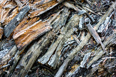 Old dry wooden surface with frost Stock Photos