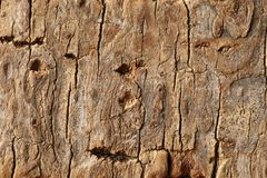 Old dry wooden surface, textured and detailed. Old rough and weathered wooden surface close up, dirty, textured and detailed royalty free stock photo