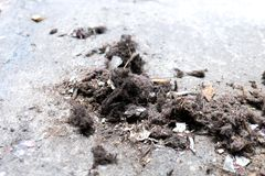 Old dust and garbage. On the cement ground Royalty Free Stock Photo