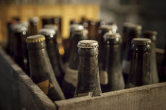 Old dusty bottle of beer. In a wooden case Royalty Free Stock Images
