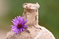 Old dusty bottle with flower. Macro detail of old dusty bottle with flower Royalty Free Stock Photo