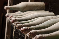 Old dusty wine bottles with spiderweb in cellar Stock Photo