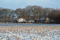 Old dutch farm in winter countryside landscape. Old dutch farm in a winter countryside landscape Royalty Free Stock Image