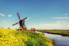 Old Dutch windmills spring from the canal in Rotterdam. Holland Stock Photography