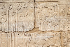 Old egypt hieroglyphs carved Royalty Free Stock Image