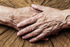 Old elderly hands and old tree Stock Image