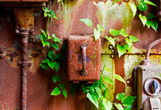 Old electrical panel on iron wall and leaves of ivy. Old electrical panel on a iron wall and leaves of ivy stock images
