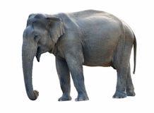 Free Old Elephant Stock Photography - 22722772