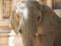 Old elephant. Old elephant with antique background Royalty Free Stock Images