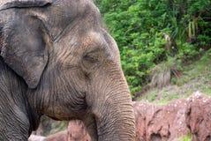 Elephant eyes closed royalty free stock image