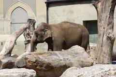 Old elephant Royalty Free Stock Image