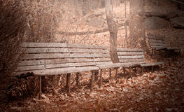 Old empty benches in the autumn forest Stock Photography